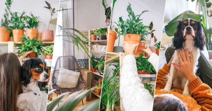 O poder das plantas e dos animais para tornar a vida melhor em casa