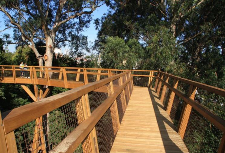 Serralves inaugura passadiço entre a copa das árvores – terá 260 metros de comprimento